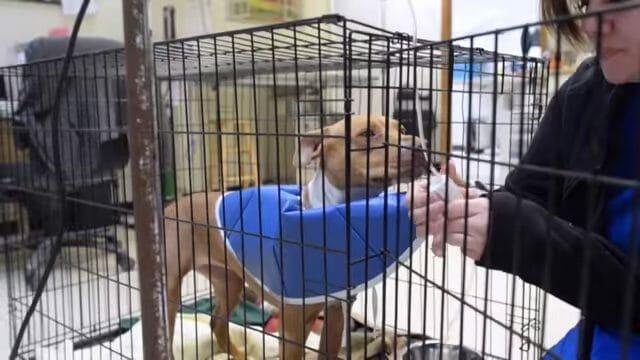 Kinder spritzen Straßenhund Kokain: Tierschützer begleiten 'Peanut' beim Kampf ums Überleben