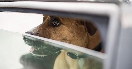 Hund sitzt zwei Stunden in Hitze Auto fest: Herrchen schockiert Polizei mit Aussage