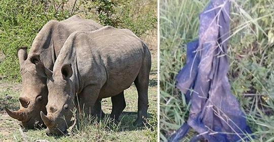 Wilderer, der es auf Nashörner abgesehen hatte, wird tot aufgefunden – wurde von Elefanten zertrampelt