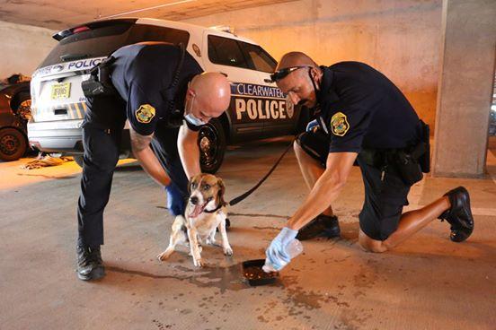 Geschichte des Tages: Besitzer schloss während einer Hitzewelle einen Hund ins Auto ein, die Polizei kam, um ihn zu retten