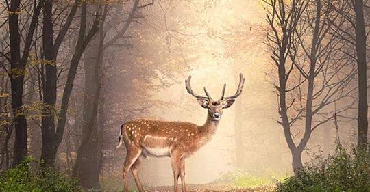 Spiritueller GefährteKrafttier: Diese Bedeutung hat Ihr Wegbegleiter für Ihr Schicksal