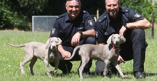 NEUE PERSONENSPÜRHUNDE Diese Hunde werden die neuen Super-Schnüffler
