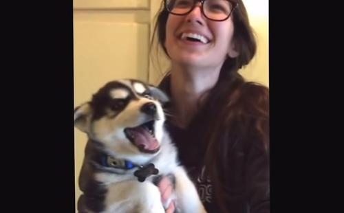 Die Besitzerin eines Baby-Huskys lacht sich kaputt über eine 'ernsthafte'  Unterhaltung