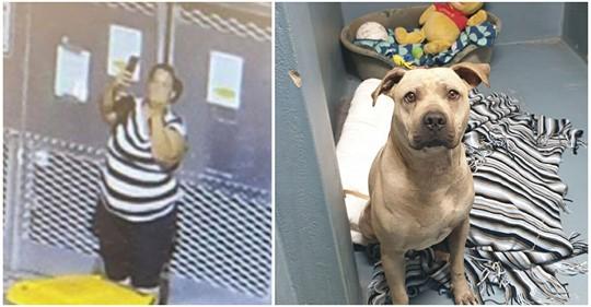 Frau setzt entführten Hund nachts vor Tierheim aus: Macht Selfie mit Mittelfinger vor Käfig