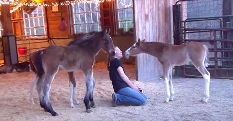 Fohlen soll eingeschläfert werden, weil es kein Rennpferd sein kann - aber eine Frau wird Teil seines Lebens