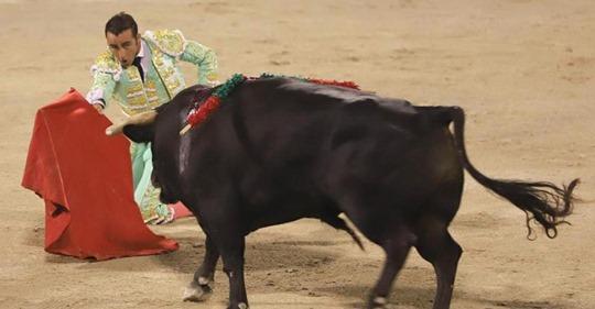Corona-Schonfrist vorbei: Stierkämpfe gehen wieder los - Tierschützer sind empört