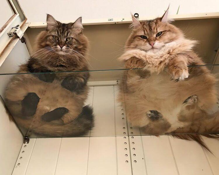 Aus diesen Gründen sollte jeder Katzenbesitzer einen Glastisch benutzen