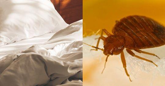 Ungeziefer im Bett: So bekämpfst du Bettwanzen, Milben und Co.