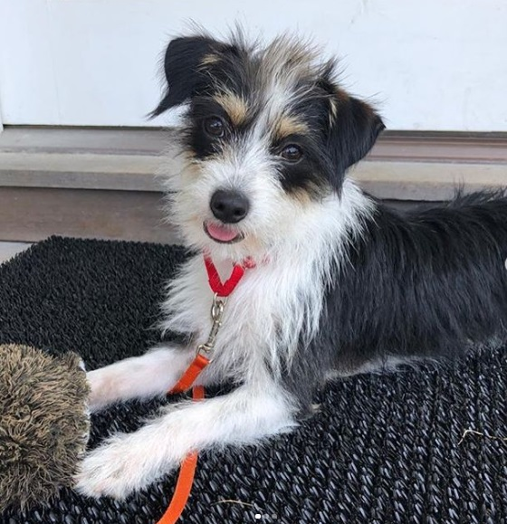 Liev Schreiber adoptierte einen süßen Welpen, nachdem sein Hund Woody nach einem Autounfall gestorben war