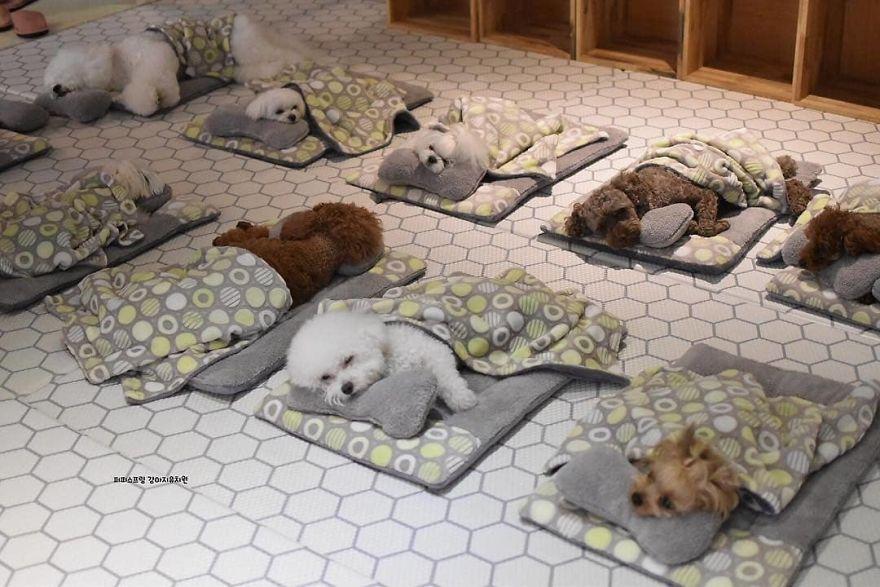 Fotos von Welpen beim Mittagsschlaf: Hundetagesstätte verzückt Hundefreunde auf der ganzen Welt