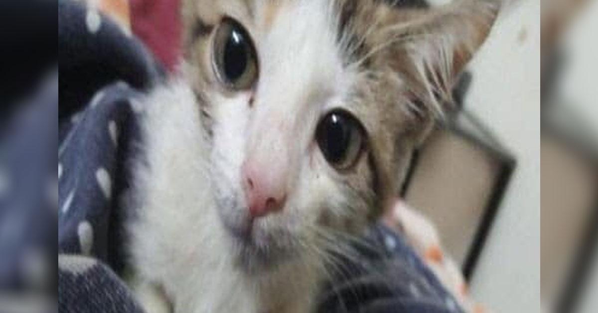 Jugendliche vergewaltigen Katzenbaby (†) wochenlang: Kätzchen erliegt inneren Verletzungen