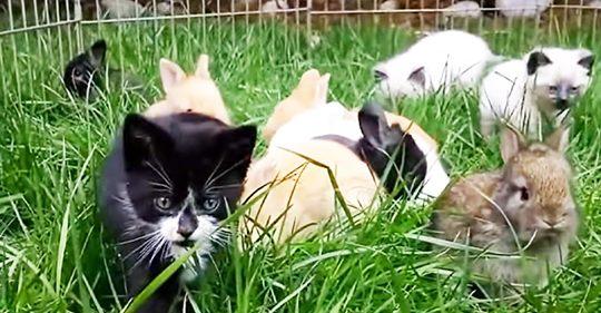 Katzenbabys wurden von Kaninchen aufgezogen und nun hoppeln sie genauso