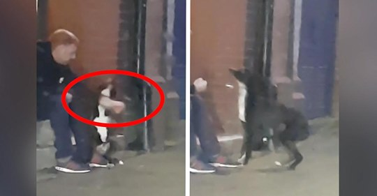 Tierquäler boxt seinen Hund mehrfach in die Schnauze   jetzt wurde er hart bestraft