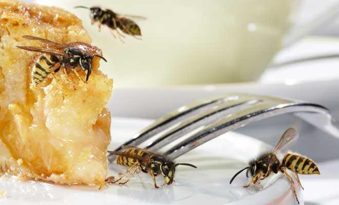 Wespenstiche – Schutz und Erste Hilfe Tipps