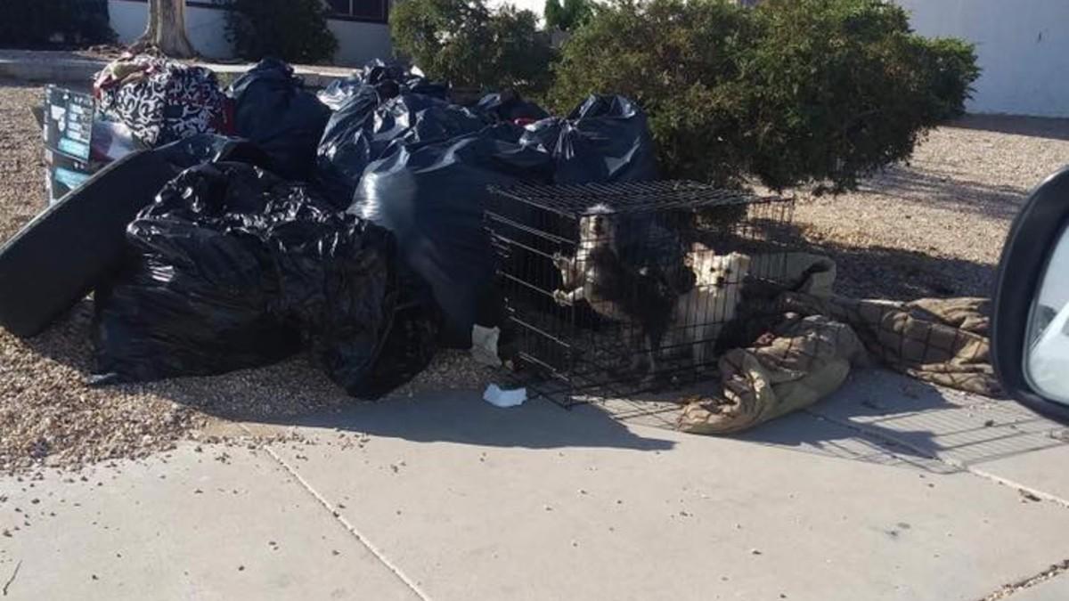 Frau wirft ihre zwei Hunde nach Zwangsräumung in winzigem Käfig in den Müll