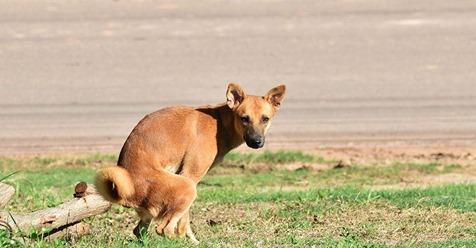 Deshalb starrt dich dein Hund beim Häufchenmachen an