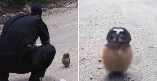 Polizistin findet junge Eule und führt niedliche Unterhaltung mit ihr