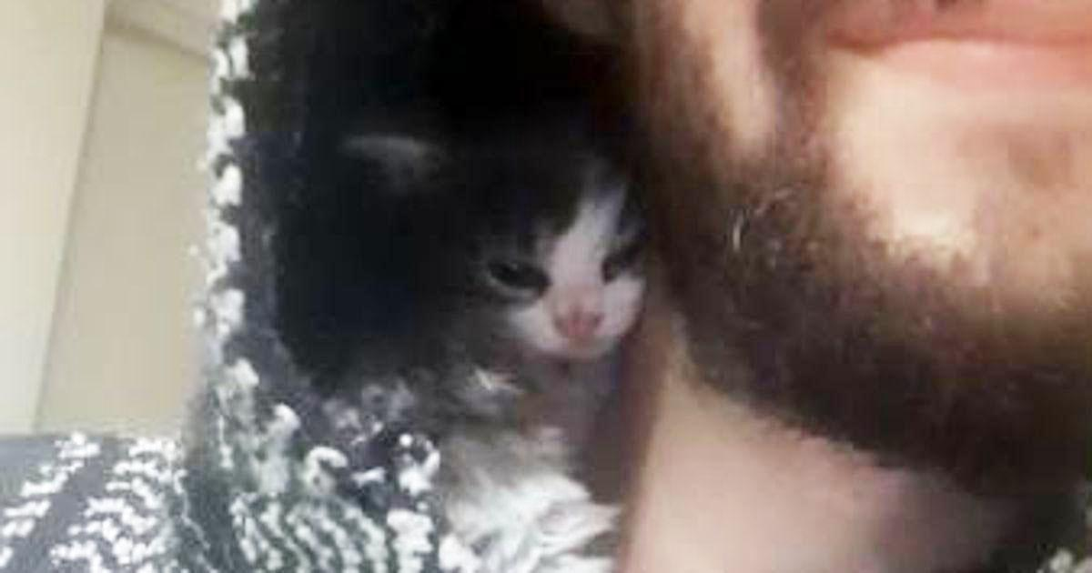 Ein nur 3 Wochen altes Kätzchen kuschelt sich so nah an sein Herrchen wie möglich