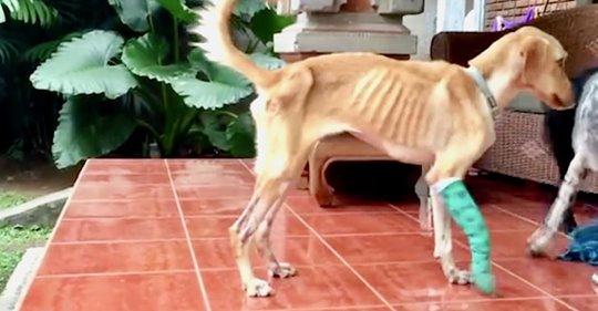 Ausgesetzter Labrador überlebte monatelang in Kanalisation, bevor er eine zweite Chance bekam