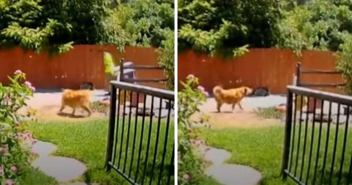 Das Filmmaterial einer Sicherheitskamera zeigt einen heldenhaften Hund, der einen Sanitärarbeiter zur älteren Besitzerin führte, die gestürzt ist