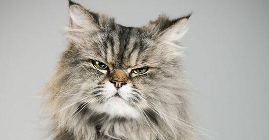 Katze miaut nachts: 7 Tipps gegen Katzenterror