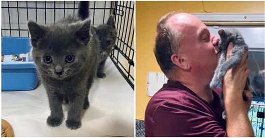 Tierheim-Pfleger baute einzigartige Beziehung auf: Gerettetes Katzenbaby wird adoptiert
