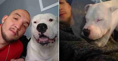 Mann verkauft sein Auto – damit er genug Geld für seinen Hund hat und ihm sein Leben retten kann