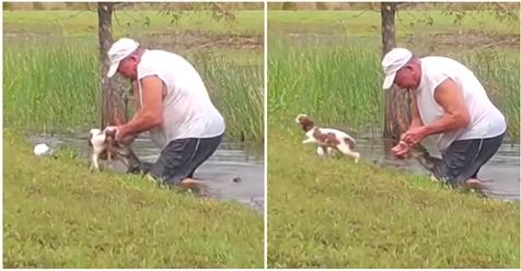 Fast beim Gassi gefressen worden: Rentner (74) rettet kleinen Hund aus Maul von Krokodil