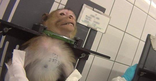 Versuchslabor wird zum Tierheim: Wo früher Tiere gequält wurden, sollen sie heute schlafen