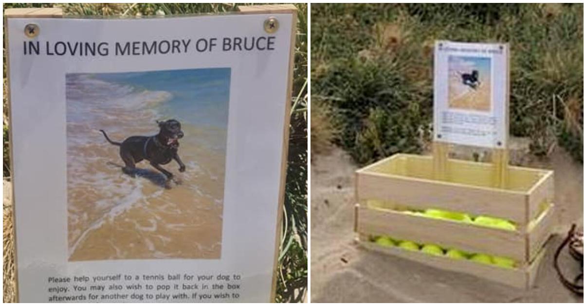 """""""In liebender Erinnerung an Bruce"""": Frau stellt Tennisball Box für ihren toten Hund an Strand auf"""