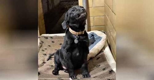 Ein Hund aus dem Tierheim strahlt freudig die Besucher an, die an seinem Zwinger vorbeilaufen, damit er endlich von jemandem adoptiert wird