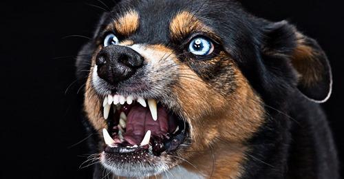 AGGRESSIVE HUNDE Hundeangriffe erkennen und richtig entschärfen und wie ein Regenschirm Ihnen helfen könnte...