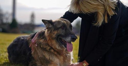 Präsident Bidens Hunde sind ins Weiße Haus eingezogen – und haben schon ihre Lieblingsplätze