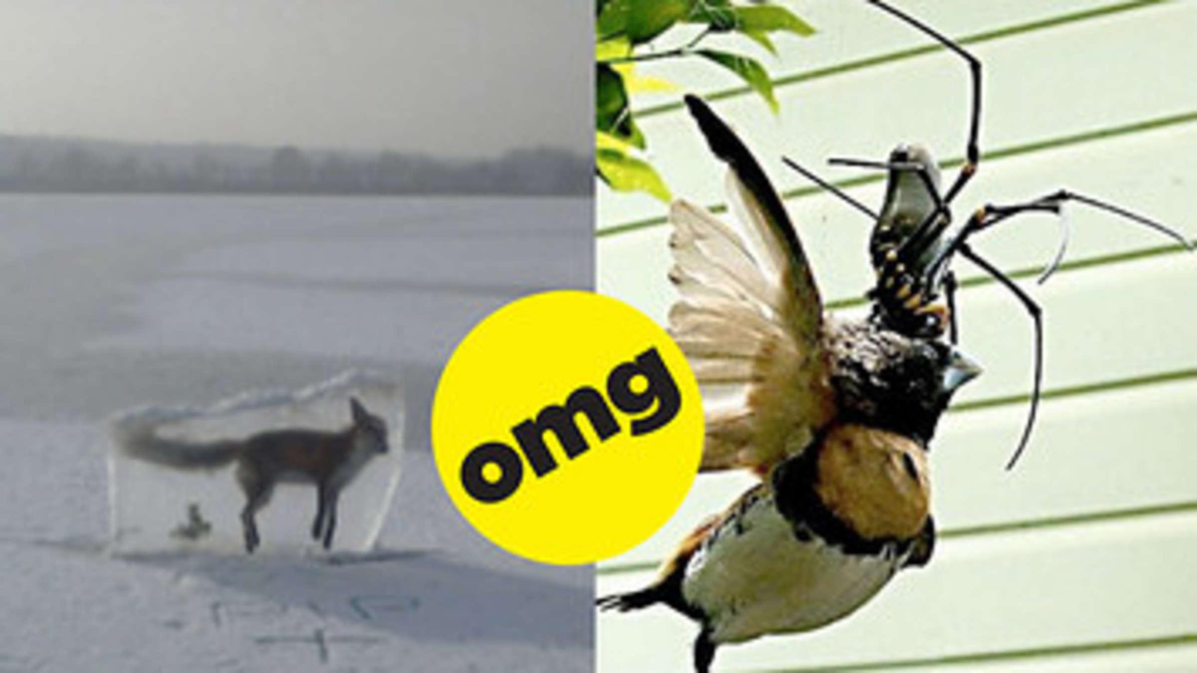 11 Fotos, nach denen ich für heute echt genug von Mutter Natur habe