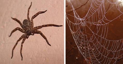 Gründe, warum man Spinnen in der Wohnung niemals töten sollte