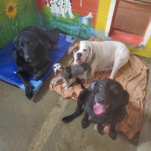 Ihre ganze Familie starb: Vier Hunde suchen gemeinsam nach einem neuen Zuhause