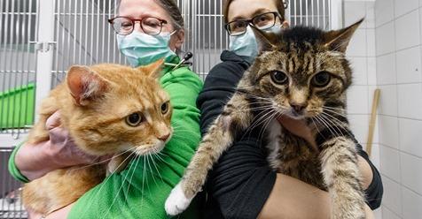 Hatten beide Corona: Katzen suchen nach Quarantäne neues Zuhause