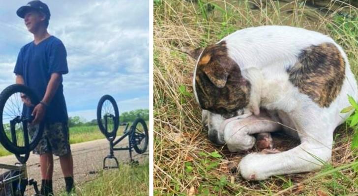 Drei Dreizehnjährige retten einen Hund, der sich nicht mehr bewegen konnte, von der Straße