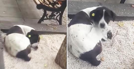 Die emotionale Reaktion eines Hundes, als er nach drei Jahren auf der Straße mit seinem Besitzer wiedervereint ist