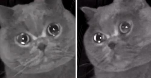 Sie lässt die Katze allein zu Hause, sieht sie dann aber durch die Überwachungskamera
