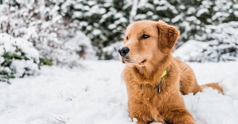 Pärchen rettet festgefrorenen Hund – und kassiert Anzeige wegen Corona Verstoß