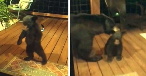 """Der kleine Bär geht zu nah ans Haus: Die Mutter """"schimpft"""" ihn aus und trägt ihn weg"""