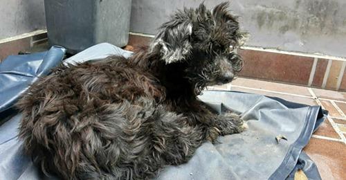 Herzlos Herrchen setzt alten Hund aus & klebt seine Augen zu, damit er nicht zurück nach Hause findet