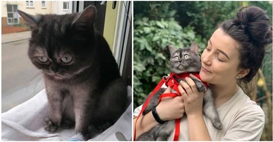 """Frau adoptiert """"hässliche"""" Katze, die niemand wollte: """"Das Beste, was mir jemals passiert ist"""""""