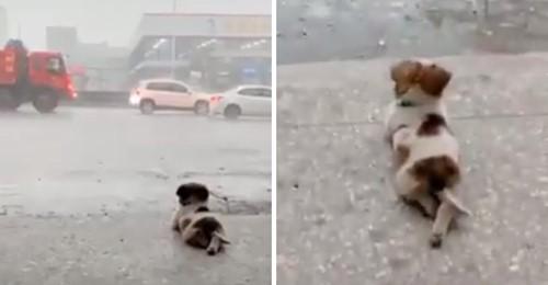 Kleiner Hund stiehlt den Menschen auf der ganzen Welt die Herzen, indem er ruhig den Regen beobachtet