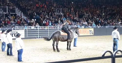 Pferd hört den Country-Song, nickt dem Besitzer zu und beginnt mit dem Line Dancing