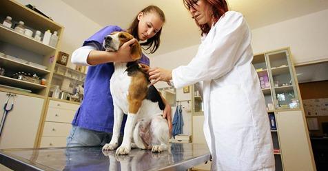 Magendrehung beim Hund: Was muss ich tun?