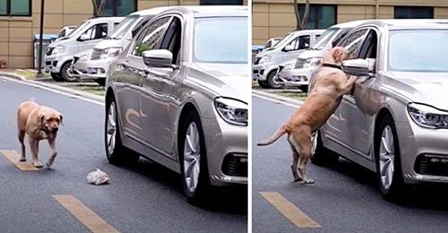 Hund sieht, wie Autofahrer seinen Müll aus dem Autofenster wirft – nimmt eine erzieherische Maßnahme vor