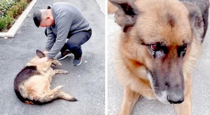 Ein pensionierter Polizeihund ist aufgeregt, als er seinen Trainer wiedersieht: Er hatte ihn nie vergessen