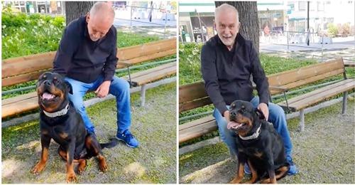 Lieber Rottweiler muntert alten Mann im Park auf, der alleine sitzt – hatte seinen geliebten Hund verloren